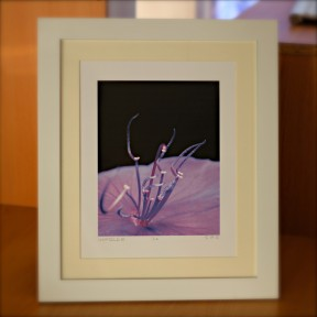 CzrArt: Deep Purple Glory (framed)