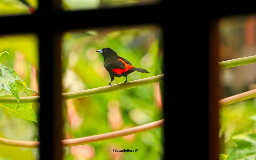 Viajero (Traveller) En Bocas Del Toro Photo Journal